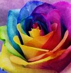 Charley Descoteaux's signature rainbow rose